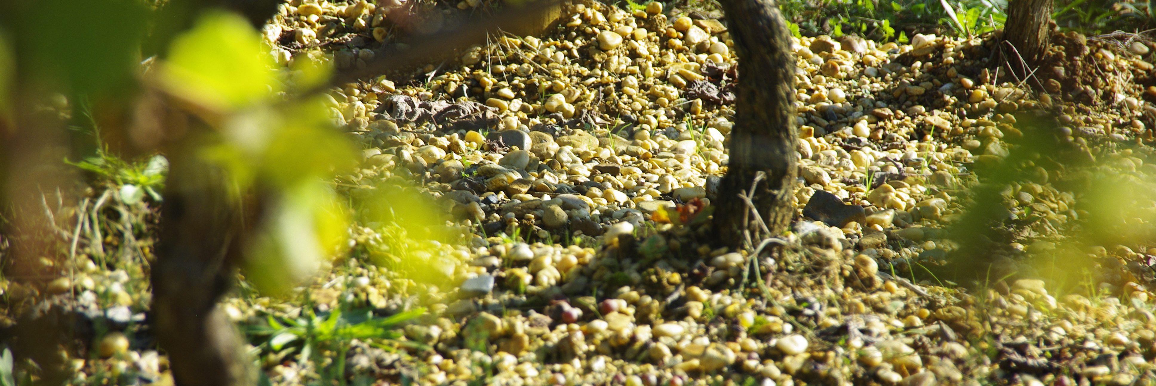 Vineyards for sale