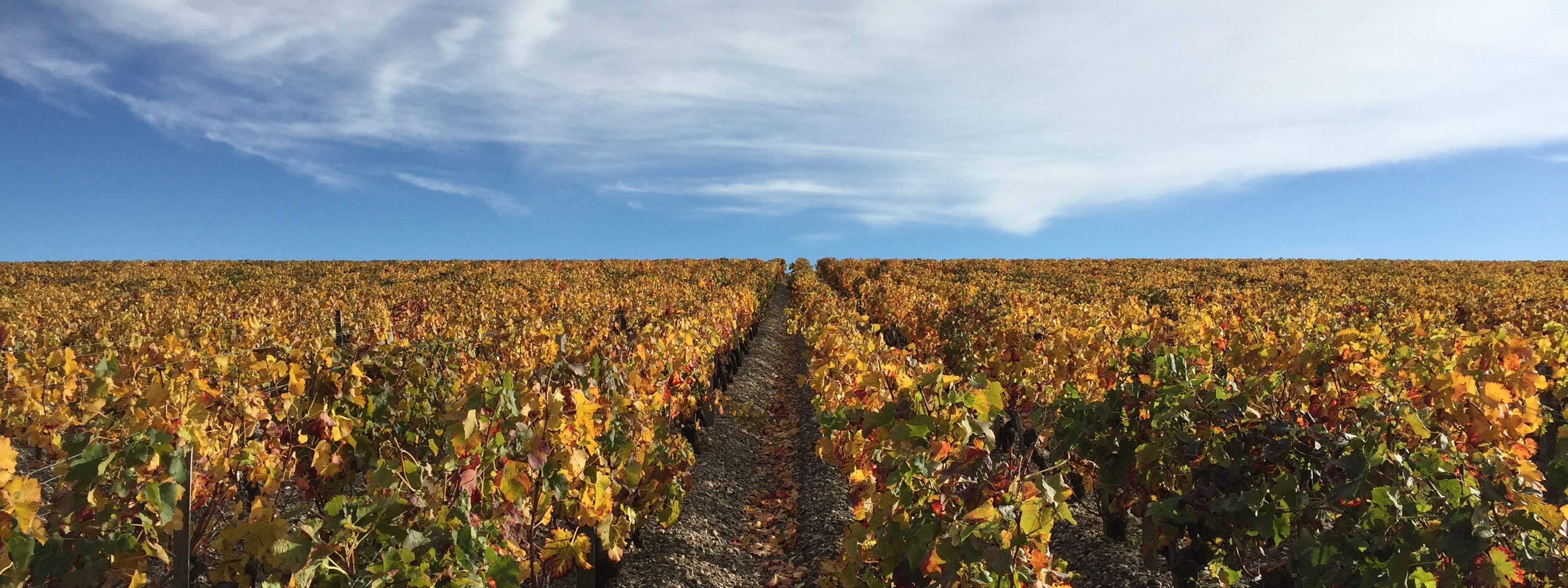 A comprehensive service for vineyard buyers
